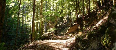 Wiedmer, Christian - Wanderung durch die Gorges de Covatannaz, Kanton Waadt. Foto: Autor.
