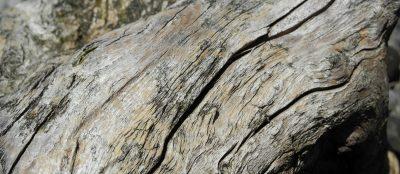 Impressum. - Holz im Garten. Wiedmer, Christian: Beratung, Therapie, Wanderungen. Foto: Autor.